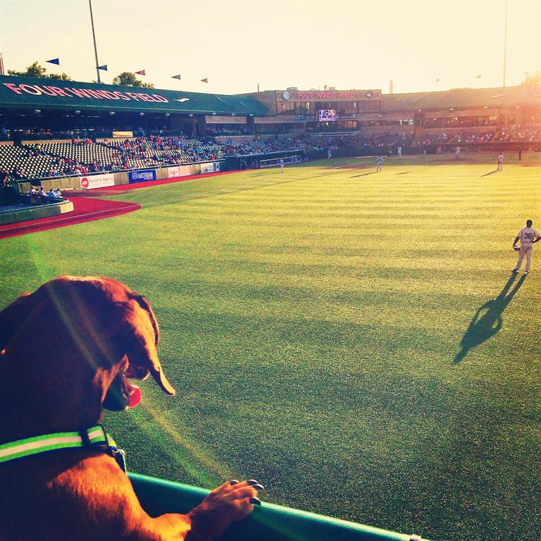 Dog Days at Four Winds Field
